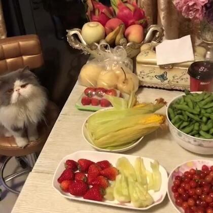 #喵星人##宠物##宝宝##热门#嘟嘟🐱又不吃还做好了😄😄