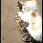 哈哈哈!太可爱了!#宠物##精选#