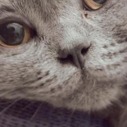 #我的猫片#为啥……你那么生无可恋