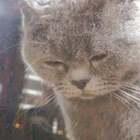 猫的内心是很孤独的 只有心灵懂的你才会懂他的心❤️ #美拍10秒电影##宠物#