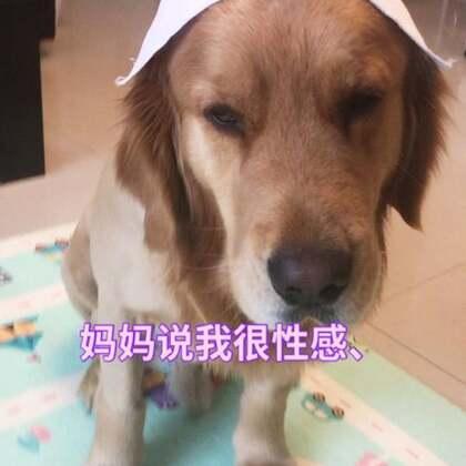 最美金毛护士,哈哈哈。虽然你的原主人去世了,我算是你的领养妈妈,但是愿意把全部的爱给你,给你一个幸福多彩的狗生。#金毛小护士##支持领养,谢绝遗弃#