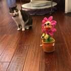 #一起走进西蒙剧##给宠物配音#太阳花的故事,谁是真正的戏精呀?……#宠物#