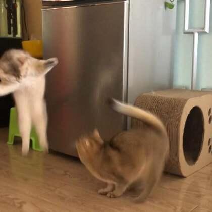 一周没发它俩的视频了,想它俩了吧#宠物#