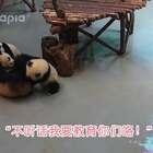 #萌团子日常# 熊孩子太皮了,扛不住啊扛不住!溜了溜了……