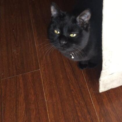 #宠物##精选# 大哥美男已经太厉害了!直接偷夜华的幼猫猫粮吃呢!夜华都看傻了!😹😹@美拍小助手 @宠物频道官方账号