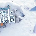 地球最北边的动物园👻有各种各样可爱的极地动物!你最喜欢里面哪个动物宝宝呢😍 【点赞+评论】送【北欧巧克力】喔!#北欧旅行##萌宠##我要上热门# @美拍小助手