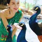 孔雀传入中国后来到的第一个城市:德宏芒市。在原生态的孔雀谷里,感受中华民族之美~#精选##云南之旅##旅行在路上#