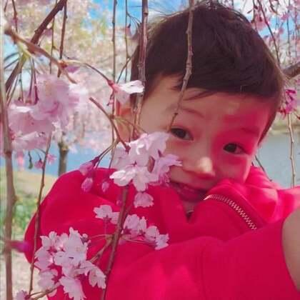 #宝宝##春天##樱花#乘樱花🌸还没凋谢之前赶个末班车赏樱。今年冬天特别长,所以樱花开得晚。每年去看一次樱花是我们家的传统,希望可以坚持下去。