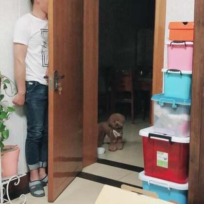#宠物#🙈🙈K爸一个人回南京了,下个礼拜K麻要产检,所以就先不回去了!走之前要撩一下Kk,结果小胖纸很淡定!并不着急找到他!😂😂心想:这俩无聊的又想干嘛了!