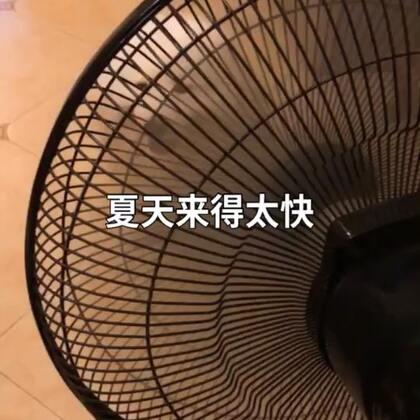 (离人愁)胖布终结版!😄#精选##宠物##热门#