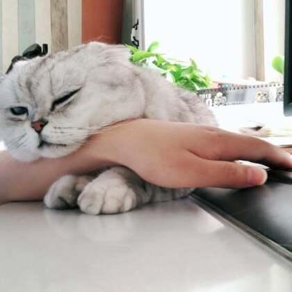 感动么?不敢动……#宠物#
