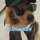 #宠物##搞笑#