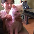 🍉:放开我!我要找胡叔叔!! #搞笑##宠物##我要上热门#