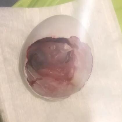 3号蛋二毛出壳啦,对的,前天出壳的取名大毛 😂😂😂后天再出壳就叫三毛 😂😂😂🤪🤪🤪#宝宝##宠物宝宝##萌宠#