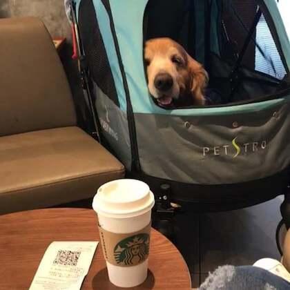 #汪星人##萌宠#星巴克的姐姐好暖心,还给了我们加冰块了,休息日,外面下雨,宝宝陪我逛商场喝咖啡。