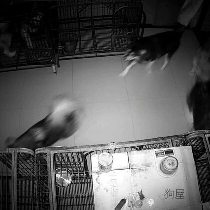 #宠物##汪星人#2018.5.10忙碌的一天.啥也没拍,晚安😴🌙⭐️🌙💤朋友们