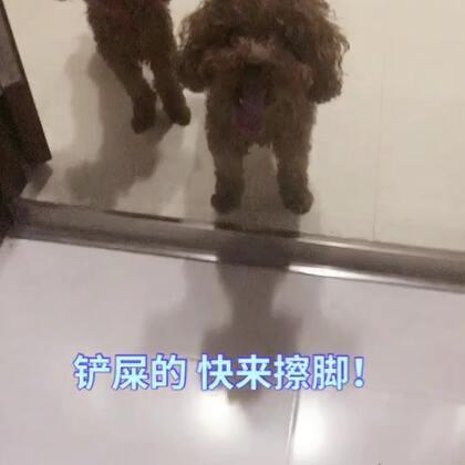 深夜遛狗🌚 #宠物##泰迪##我要上热门@美拍小助手#