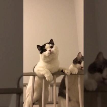 【子猫日和美拍】05-12 20:35