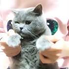 #学猫叫手势舞##美拍热爱大联盟##宠物# 幸福家的毛孩纸㊗️天下母亲们节日快乐🌹🌹 家里的颜值担当三弟独挑儿大梁完成了三兄弟的舞蹈首秀!希望大家喜欢哦!!💕💕@美拍小助手
