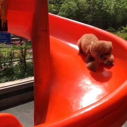 #宠物#😂😂滑滑梯咯!