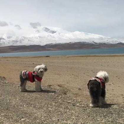 #宠物##在路上#今天太幸运了 看见了冈仁波齐神山🙏🏻