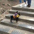 出去玩拍的这只小狗…太可爱了,这只可爱的小狗火不火,就全靠你们啦😊😊👍