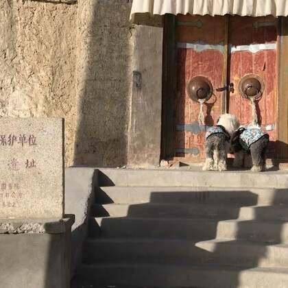 #宠物#札达 古格王朝遗址(2)我们来早了一点 9点才开门 我们先在外环转了一圈 再走回正门 差不多就9点了