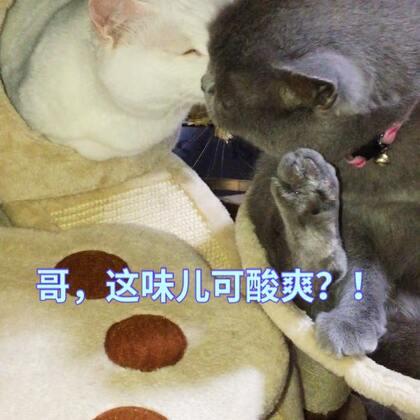 """#萌爪大比拼##精选##宠物# 三弟居然""""洗过脚""""去亲大哥!🙀🙀 看把美男熏得眼睛都闭上了!外国喵儿太重口味了吧!"""