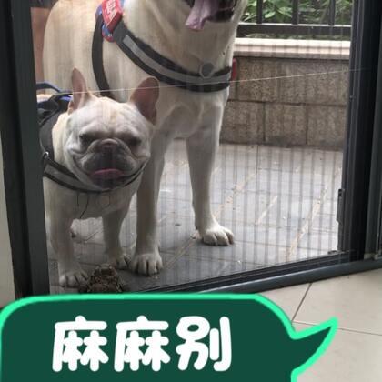 快点开门吧😂#宠物##汪星人##来福和多吉#@美拍小助手 @宠物频道官方账号