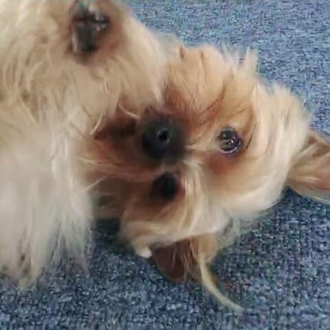 【金腹江美拍】#宠物#睡前希望能让大家治愈一下...