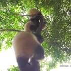 #厉害了,我的熊猫#今天由脱离了乳鸽队伍的鸽子图图来和大家一起回顾上周的直播哟~