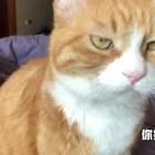 小咪:姜阿姨好讨厌,掀我被子还打扰我睡觉 #搞笑##宠物##我要上热门#