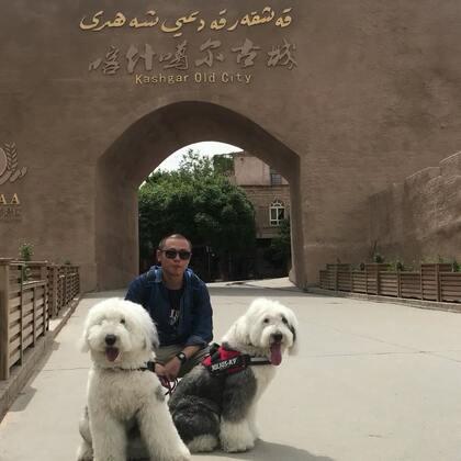 #宠物##在路上#上午送两个小脏脏去洗了澡 然后接上狗狗下午麻利儿的去逛了喀什噶尔老城 🤗
