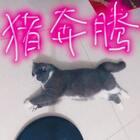 欧肥肠+猪五花+猪奔腾=🐷麻麻😁#宠物##欧北北vs花圆满#