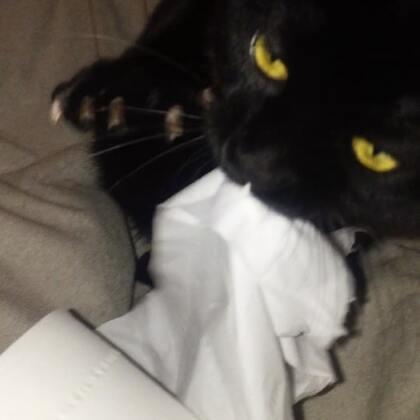 """#萌爪大比拼##精选##宠物# 今年2月的视频二哈性格的夜华晚上用他的""""无影爪""""撕卷纸呢!可爱吧!明天夜华就要去绝育了。💕💕@美拍小助手 @宠物频道官方账号"""