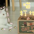mimo: 你们以为朕的身材是如何保持的?就是因为...朕不爱运动!哼哼~✨关注并评论点赞,下周抽两位送出猫咪夏日便携手持电风扇哦~✨#宠物##mimo##我们养猫吧#