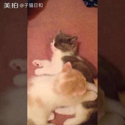 【子猫日和美拍】05-19 20:37