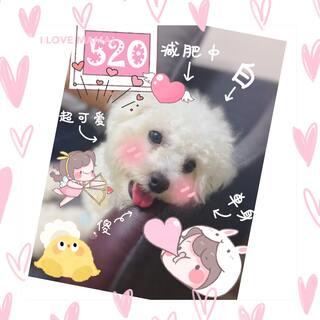 生日快乐🎉我的爱犬🤗希望永远健康开心😃爱你😘直播的时间应该是早上,我会提前告诉你们的🤩🤪#宠物##比熊##生日快乐#小号:@小吃货.傻呆💫💦