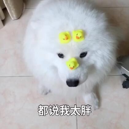 凉凉改版!!热门放原声!哈哈哈!#精选##宠物#