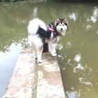 #宠物#水里有🍉