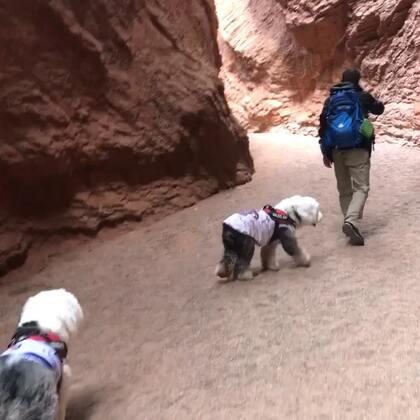 #宠物##宠物#天山神秘大峡谷我们差不多只走了一半 就断路了(2)往回返时 才陆续碰到一些游客