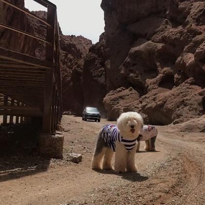 #宠物#天山神秘大峡谷(3)出来之后 开车误入红石林深处 很漂亮 感觉景色比峡谷里壮观
