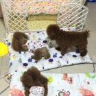 #汪星人##宠物#都在吃肉肉,哈哈!http://item.taobao.com/item.htm?id=568964008008莎拉麻麻手工纯棉宠物垫子,机洗不变形,不跑棉!