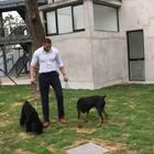 🤙🏾#宠物##狗狗#@BENGIE班吉宠物 @Naomi&ZuZu