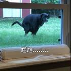 我正在搬货😂😂😂太尴尬啦........🤣🤣🤣🤣https://weibo.com/u/6279026967👈米妮表情包图🤣🤣https://weidian.com/item.html?itemID=2121349568关节炎骨维力https://weidian.com/item.html?itemID=2129328645风湿止痛膏#宠物##音乐##日志#