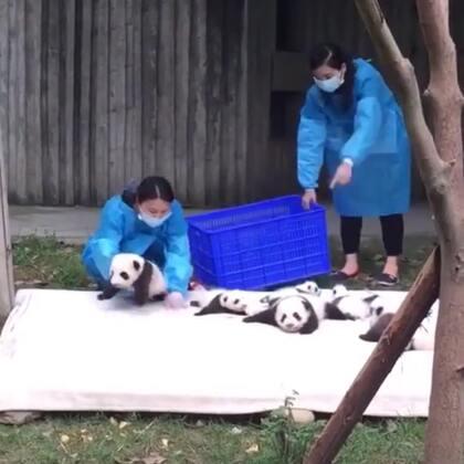 可爱的熊猫宝宝👍#精美电影##宠物#