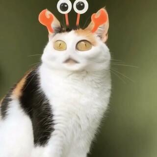 电饭煲猫击掌表情的美拍:电饭煲猫和表情妹苹果包苟同狗原创图片