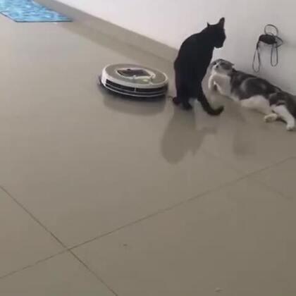 猫:你走开,不要打扰我们!😂#精选##宠物#