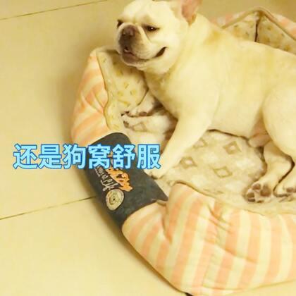 买了新床,来福多吉谁也不敢上啊🤪🤪#宠物##睡觉##我要上热门@美拍小助手#@宠物频道官方账号