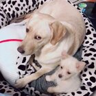 #训练狗狗##宠物##我要上热门@美拍小助手#@宠物官方频道账号